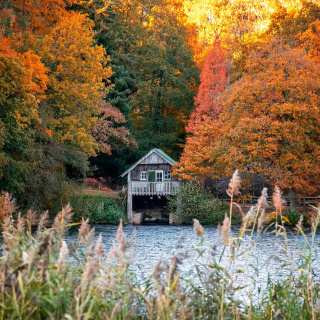 """English garden in autumn"" stock image"