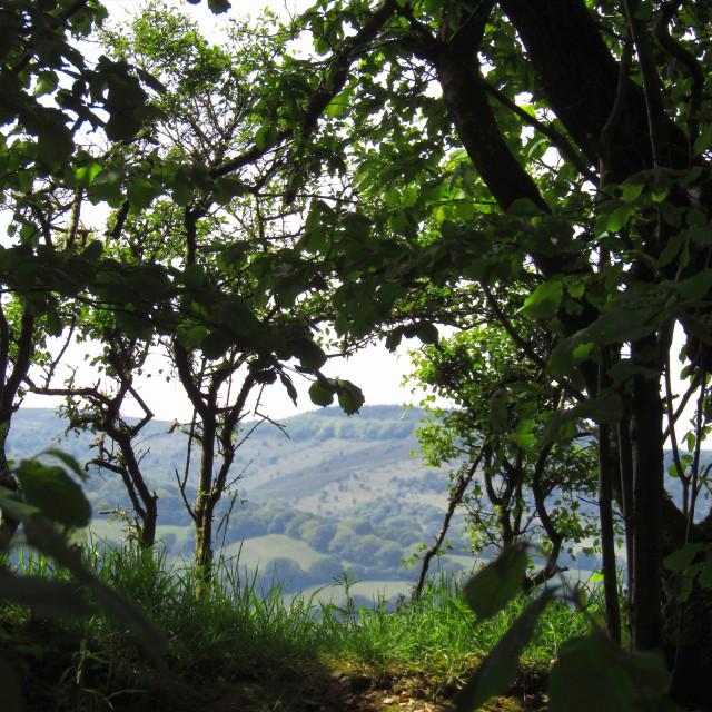 """Quantock Hills through the hedge"" stock image"