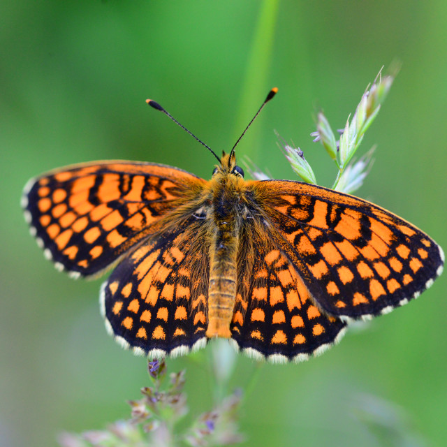 """""""orange butterfly close detail"""" stock image"""