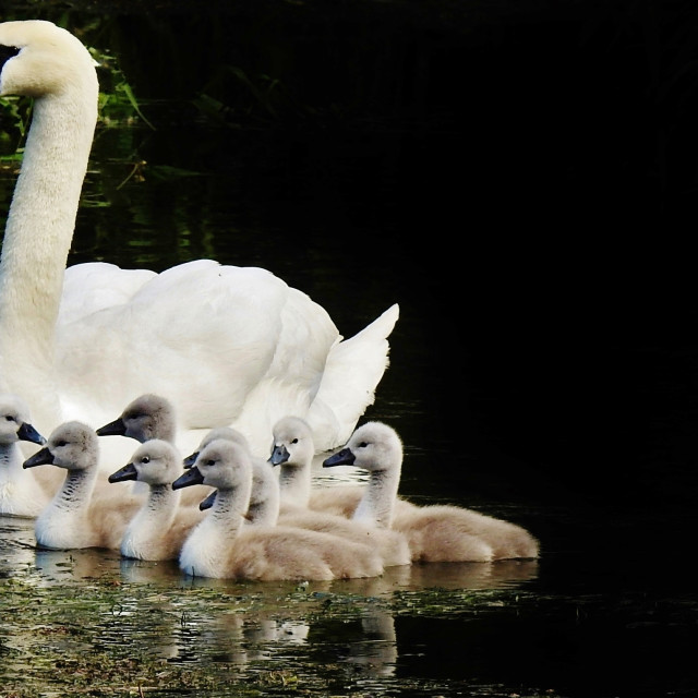 """""""Mum and Young."""" stock image"""