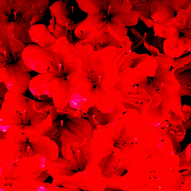 """""""Abstract - Red flowers after rain"""" stock image"""