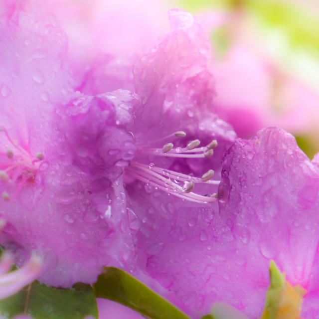 """Spring Rain"" stock image"