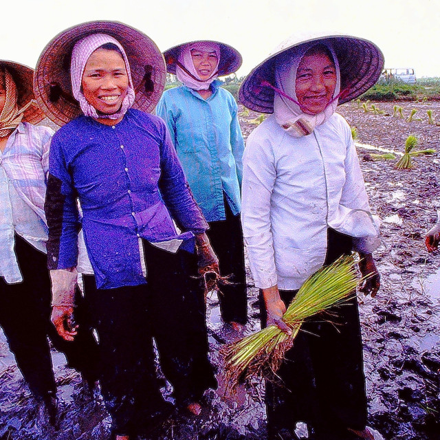 """Friendly female rice farmers in southern Vietnam"" stock image"