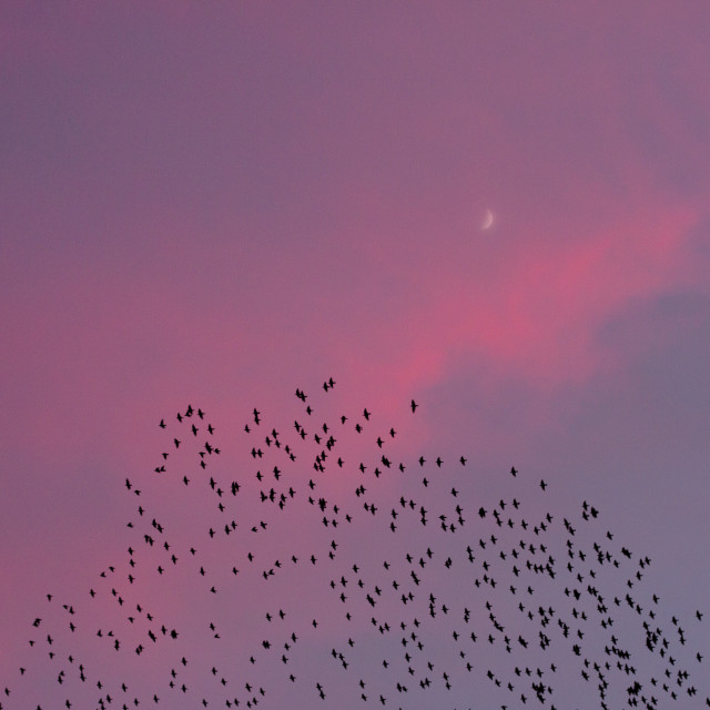 """Migrating Birds at Sunset"" stock image"