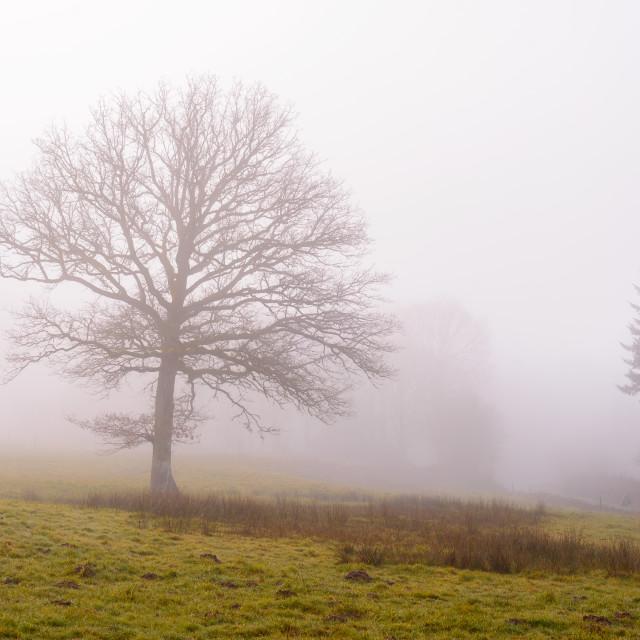 """Le Brouillard"" stock image"