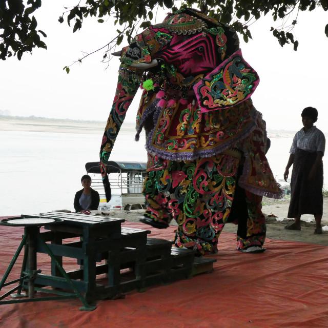 """Elephant Dance"" stock image"