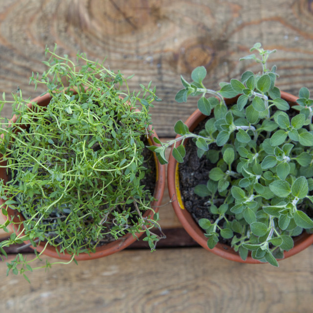"""""""A top view of 2 pot plants."""" stock image"""