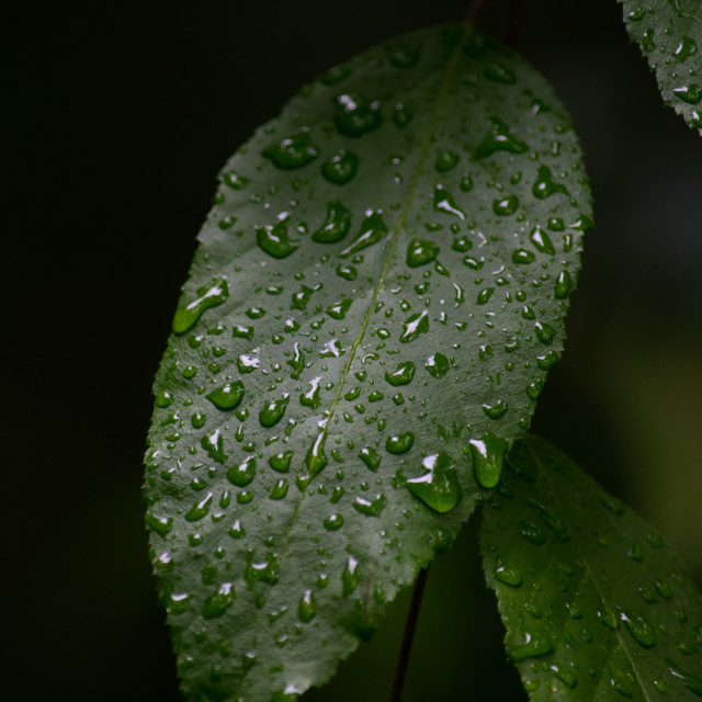 """Nature - a single leaf with water drops"" stock image"