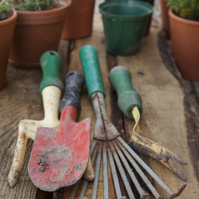 """""""A collection of gardening tools on a wood background."""" stock image"""