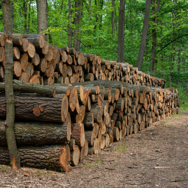 """""""Big pile of wood on the forest road"""" stock image"""