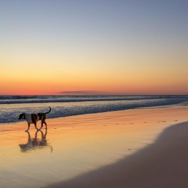 """Beautiful sunset on the beach in Western Australia, near city Perth"" stock image"