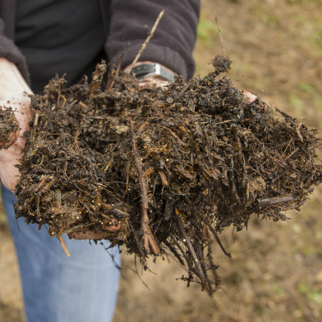 """""""A man holding out fresh compost."""" stock image"""