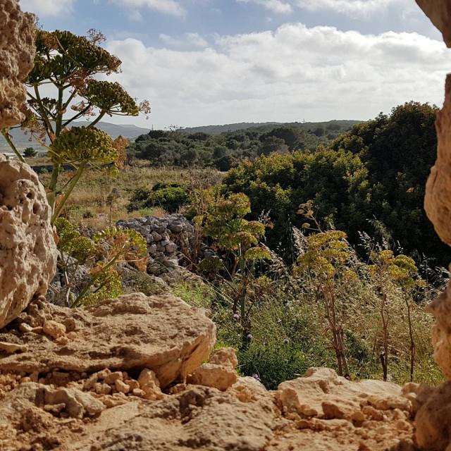 """Maltese Landscape"" stock image"