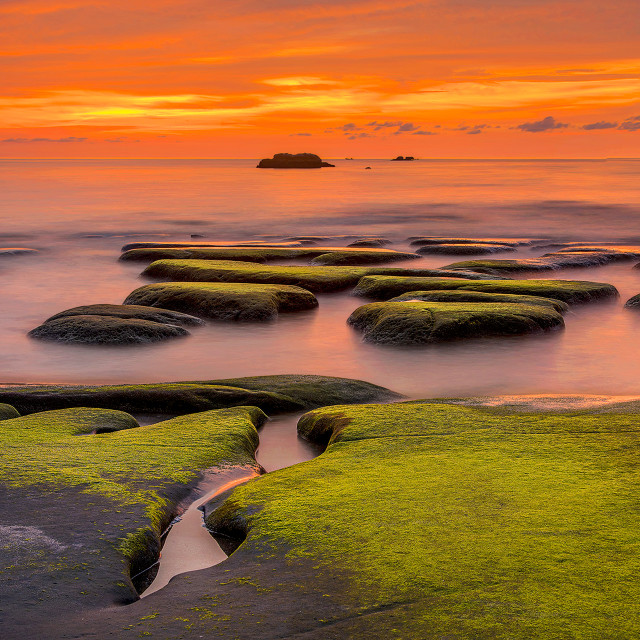 """Green Moss Sunset 02"" stock image"