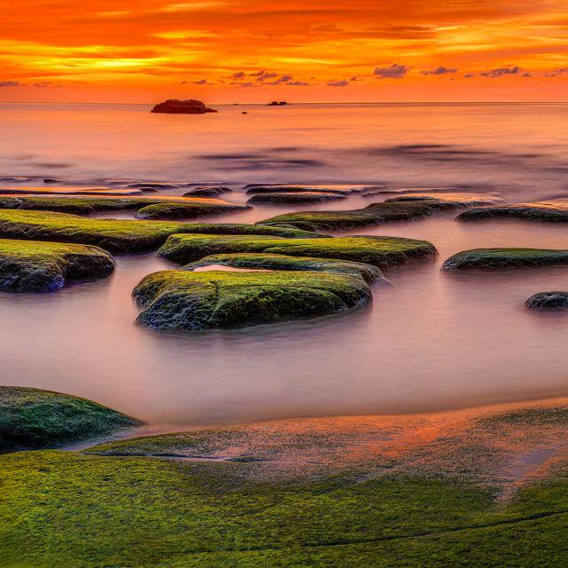 """Green Moss Sunset 01"" stock image"