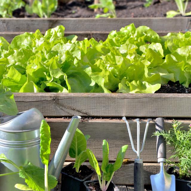 """""""gardening equipment and vegetable growing in vegetable garden"""" stock image"""