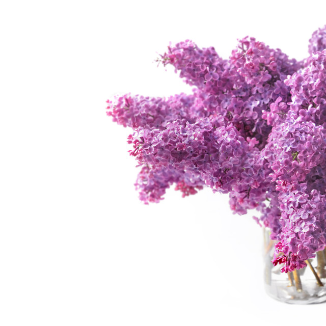"""""""beautiful bouquet of purple lilac on a glass jar isolated on white background with copy space at the left"""" stock image"""