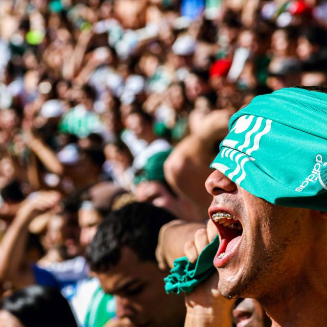 """""""Palmeiras fan"""" stock image"""