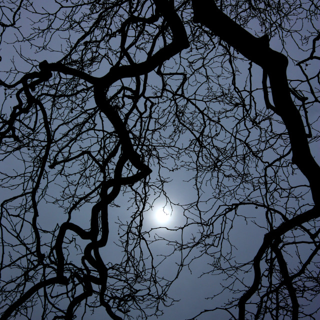 """""""Sun Shining through branches in the grounds of Kedleston Hall, Derbyshire"""" stock image"""