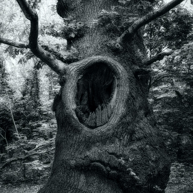 """""""The Screaming Tree"""" stock image"""