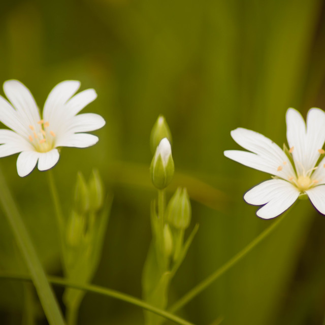 """""""Two Flowers"""" stock image"""