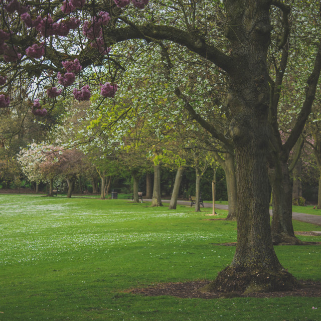 """Trees in the Park"" stock image"