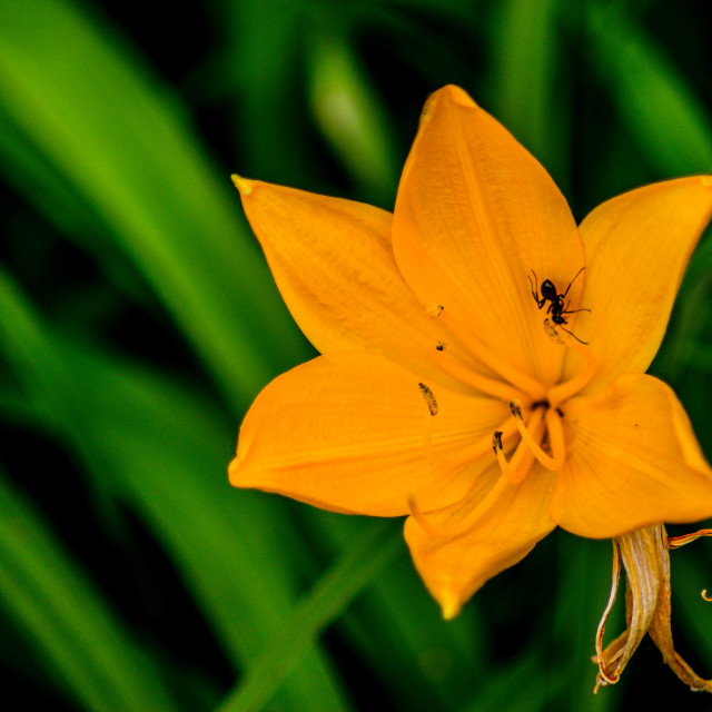 """Big Flower"" stock image"