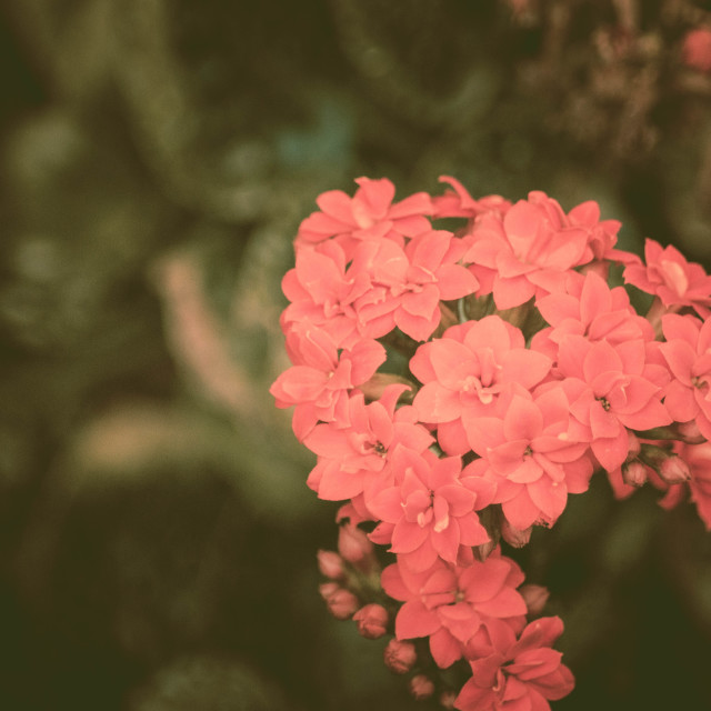 """""""Small Pink Flowers"""" stock image"""