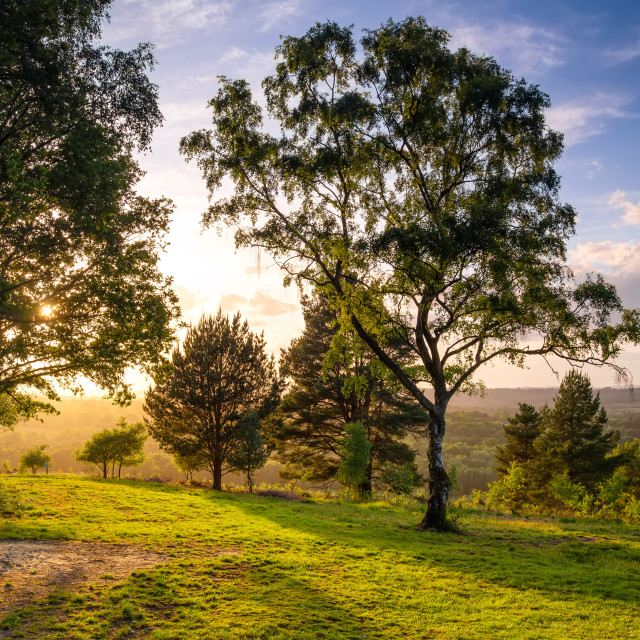 """""""Late afternoon in the woods"""" stock image"""