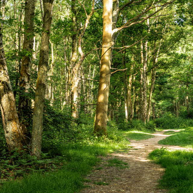 """""""Woodlands in Spring"""" stock image"""