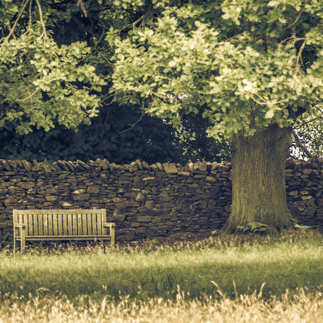 """Bench and Tree"" stock image"