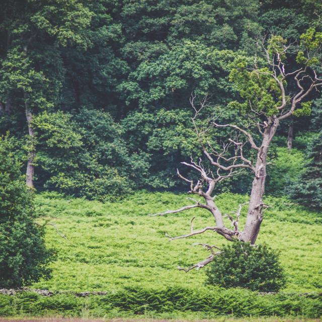 """Dry Tree"" stock image"