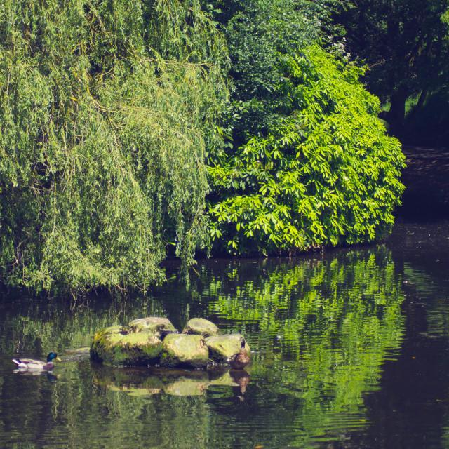 """Trees Reflection"" stock image"