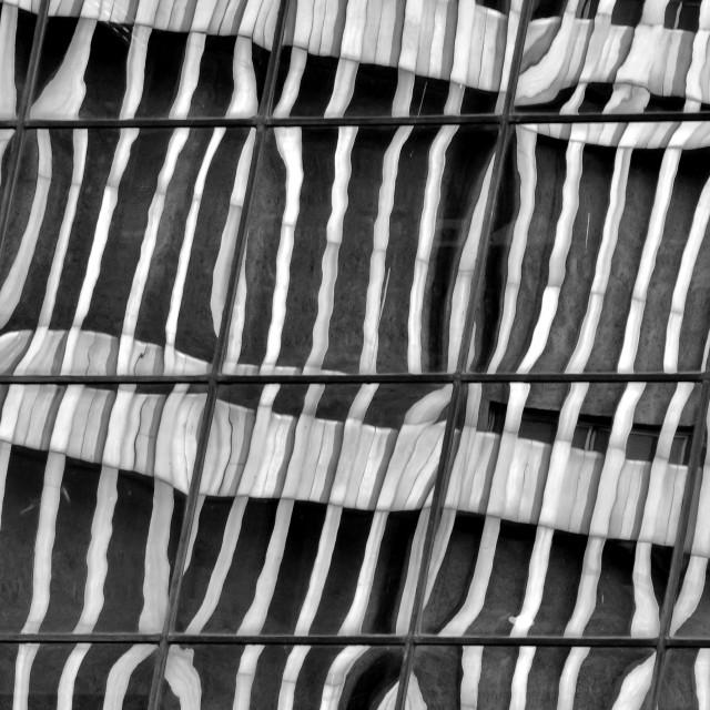 """Zebra Skin Reflection"" stock image"