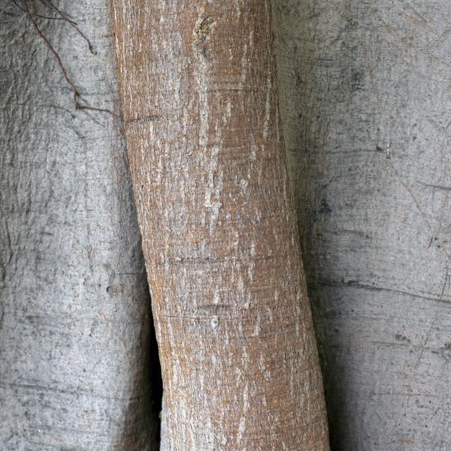"""Beautiful Texture Of A Tree Bark"" stock image"