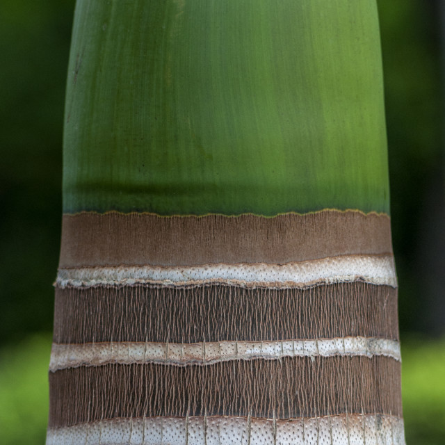 """""""Beautiful Texture On A Palm Tree"""" stock image"""