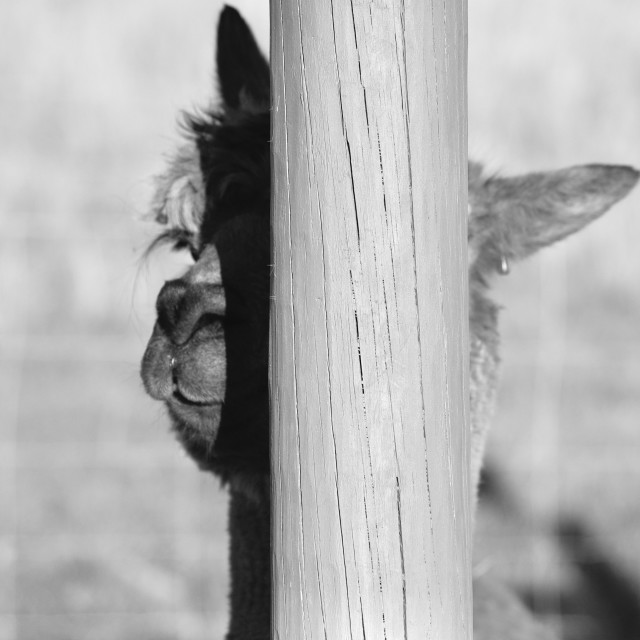 """Hide and Seek"" stock image"