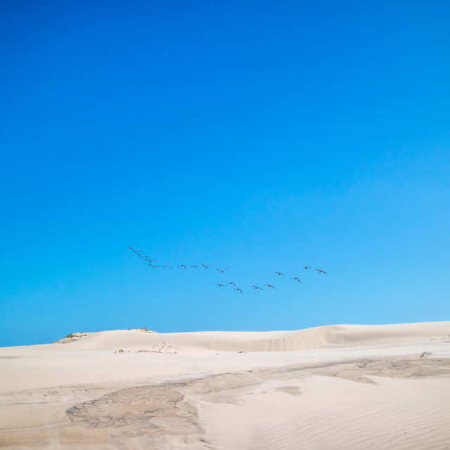 """""""A noticeable bunch of birds spotted migrating together in South Padre Island, Texas"""" stock image"""