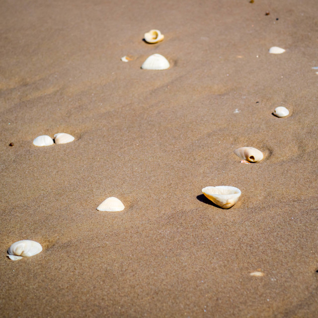 """""""Beach with a lot of seashells on seashore in South Padre Island, Texas"""" stock image"""
