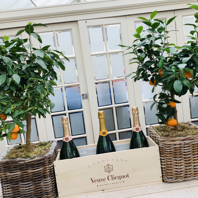 """""""Veuve Cliquot and organge trees"""" stock image"""