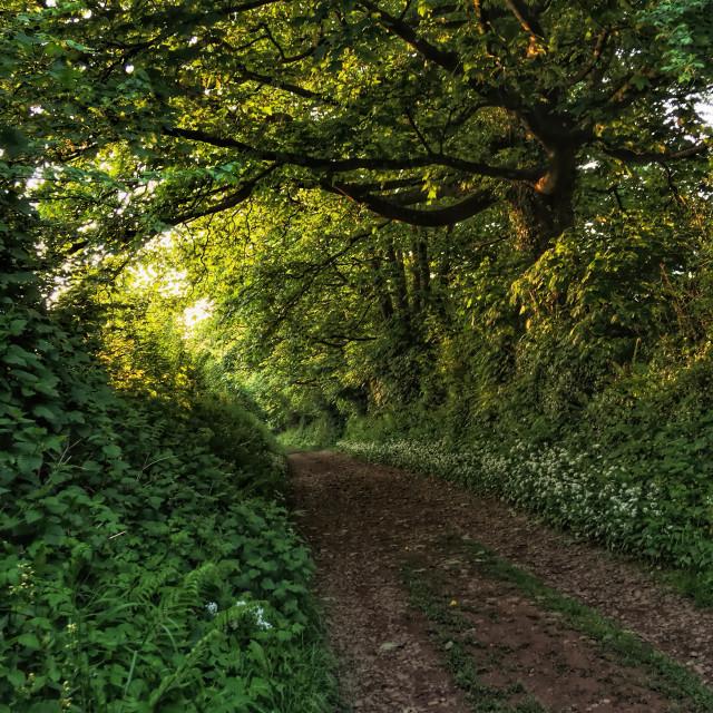 """Copland Lane - early morning"" stock image"