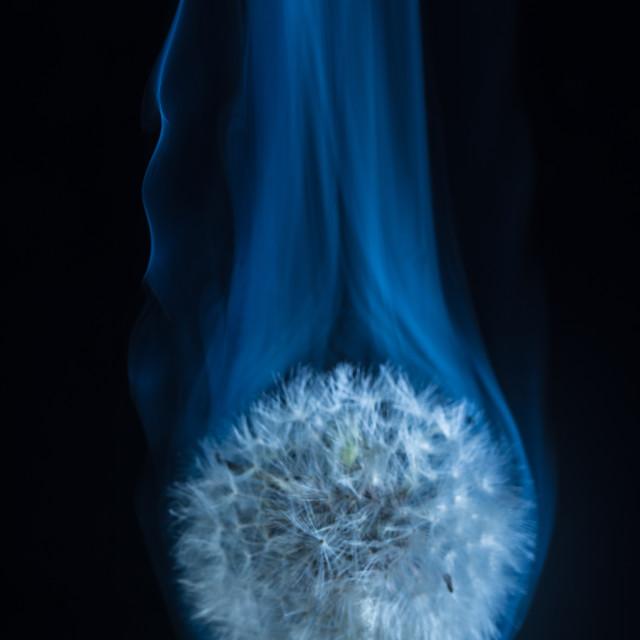 """Dandelion smoke"" stock image"