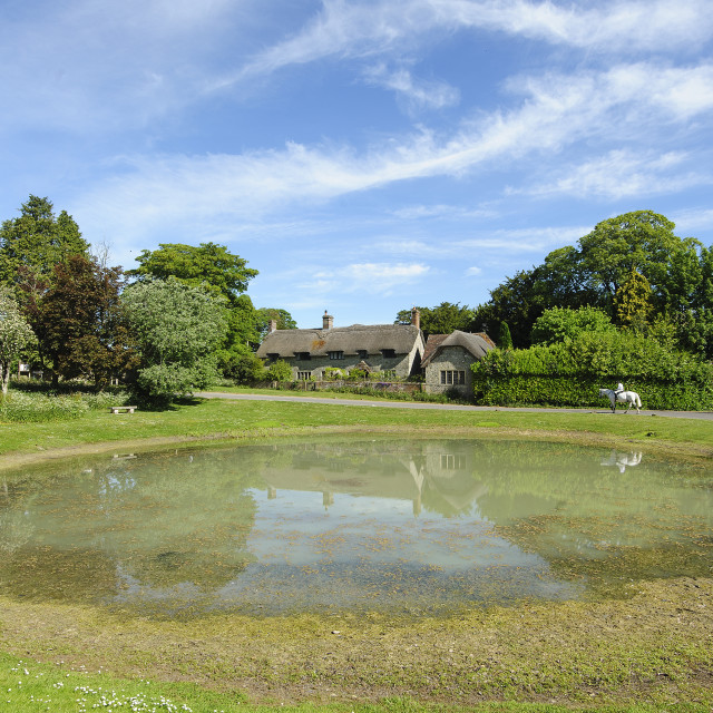 """Ashmore Village Pond, Dorset"" stock image"