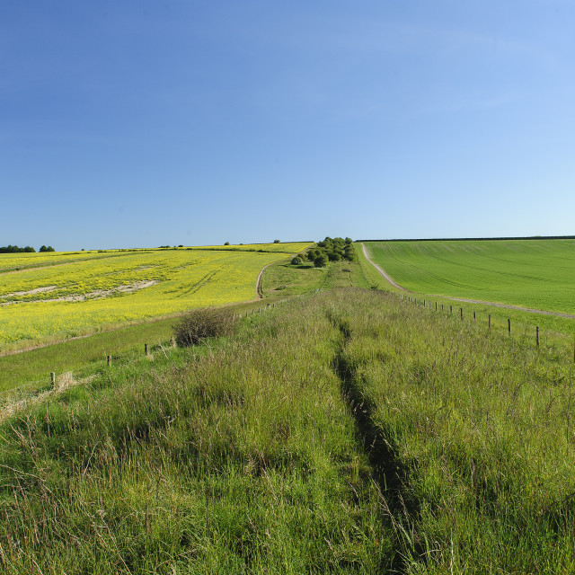 """Ackling Dyke Roman Road, Dorset"" stock image"