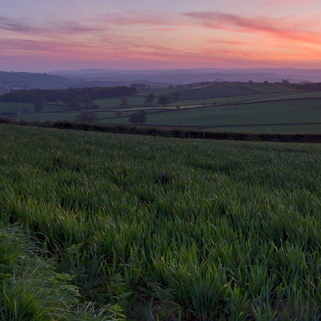 """Afterglow from Berry Pomeroy"" stock image"