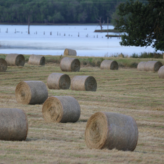 """Crop of Rolled Hay"" stock image"