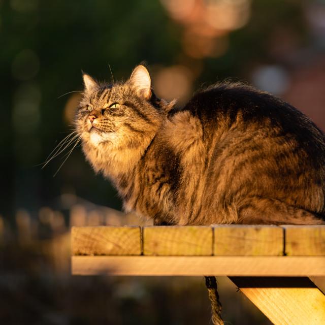 """Stripy tabby cat on garden podium in late sunshine i"" stock image"