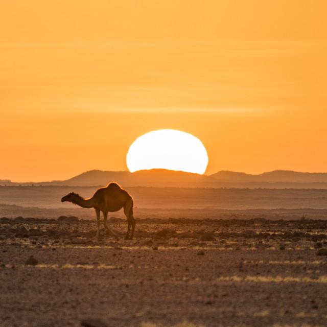 """""""Sunset at Ennedi desert (Chad)"""" stock image"""