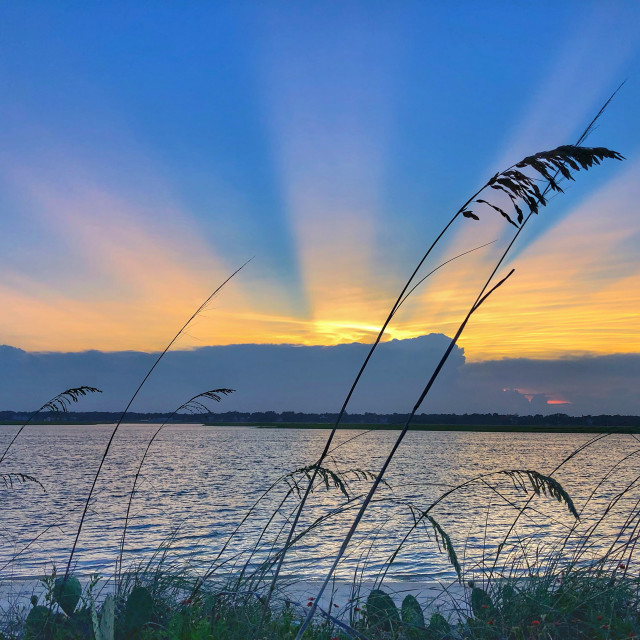 """Sea Oats at Sunset"" stock image"