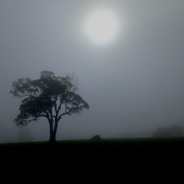 """Foggy winter morning"" stock image"